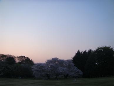April7,2009sakura1