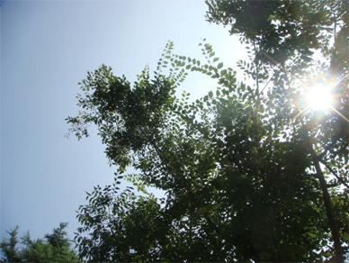 Aug3,2009sky1