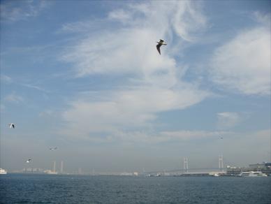 Nov9,2009yamashita1