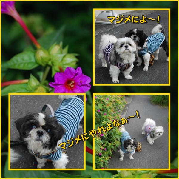 benkura2008-11-20-10.jpg