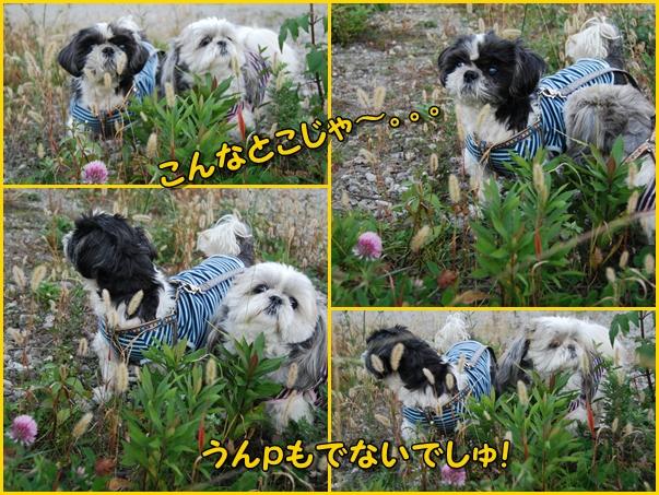benkura2008-11-20-11.jpg