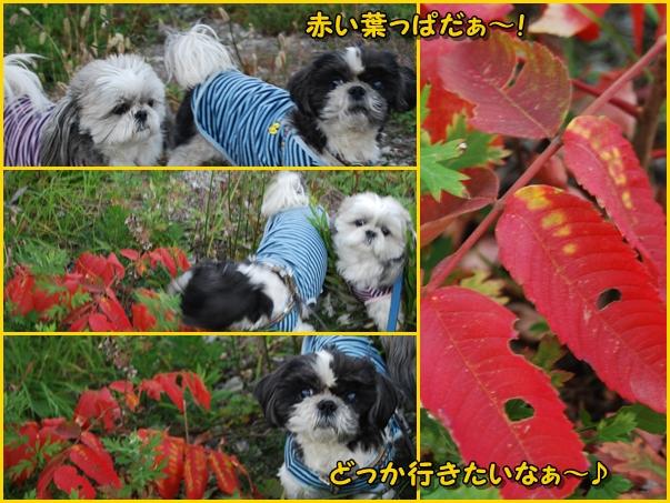 benkura2008-11-20-13.jpg