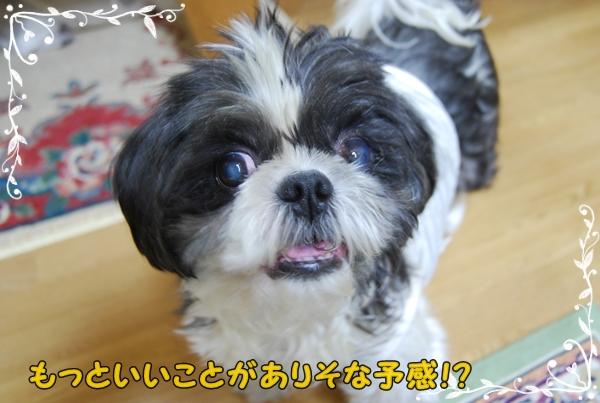benureshi1DSC_0290.jpg