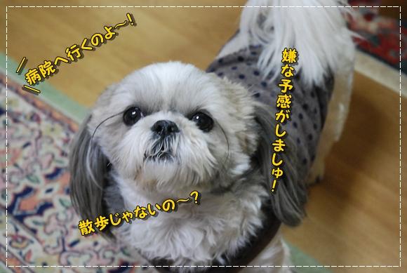 bk0128-2DSC_0096.jpg