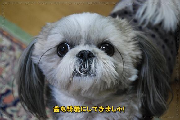 bk0128-3DSC_0091.jpg
