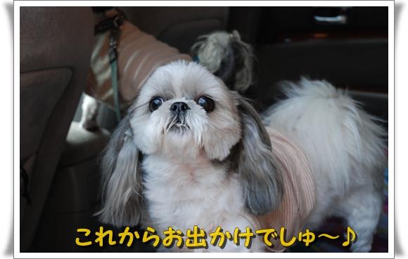 enoshima13DSC_0212.jpg