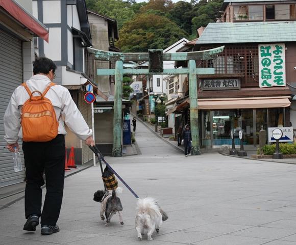 enoshima20DSC_0225.jpg
