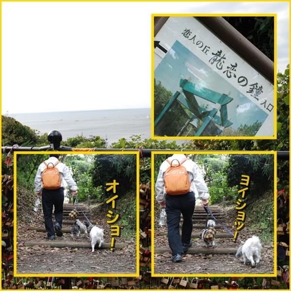 enoshima24_20081016193519.jpg