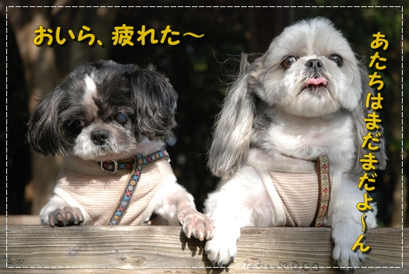 enoshima26DSC_0304.jpg