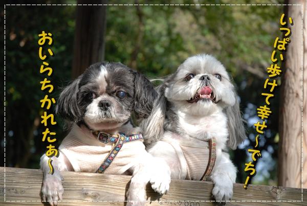 enoshima28DSC_0307.jpg