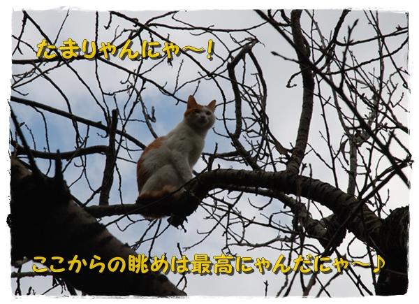 enoshima35DSC_0364.jpg