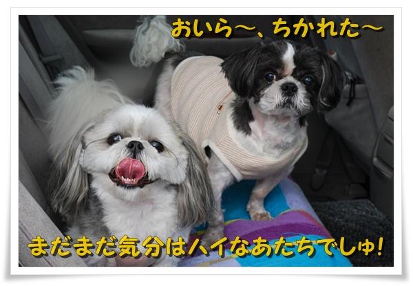 enoshima36DSC_0375.jpg