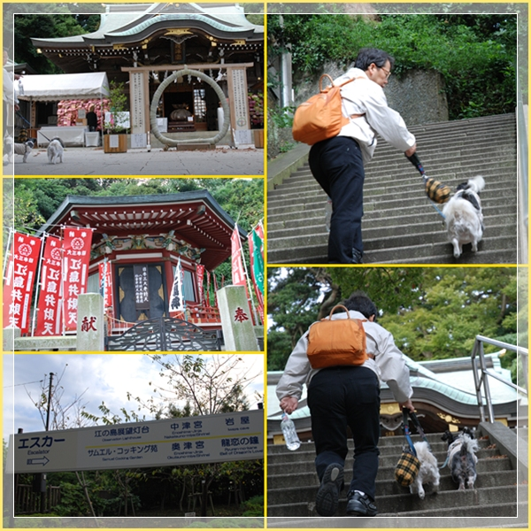 enoshima6.jpg
