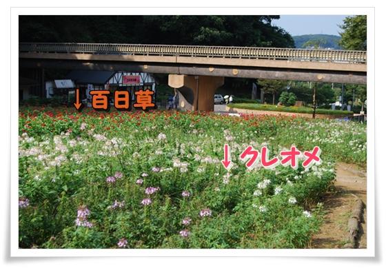 hana8DSC_0042.jpg