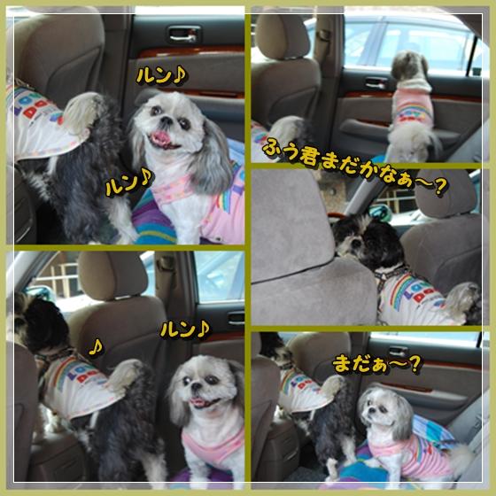 hananokuni1DSC_0003.jpg