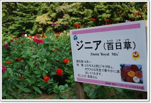 hananokuni8DSC_0136.jpg