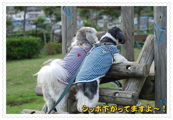 ikegami5DSC_0890.jpg