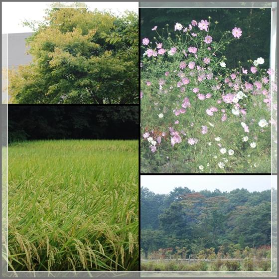 kawaguchibk3.jpg