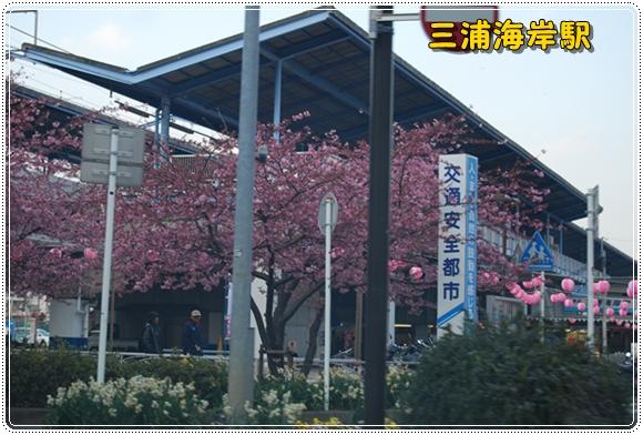 kawazu0211-4DSC_0603.jpg