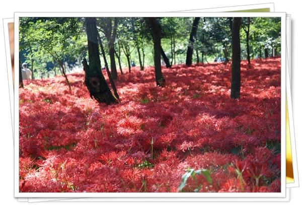 kinchakuda7DSC_0043.jpg