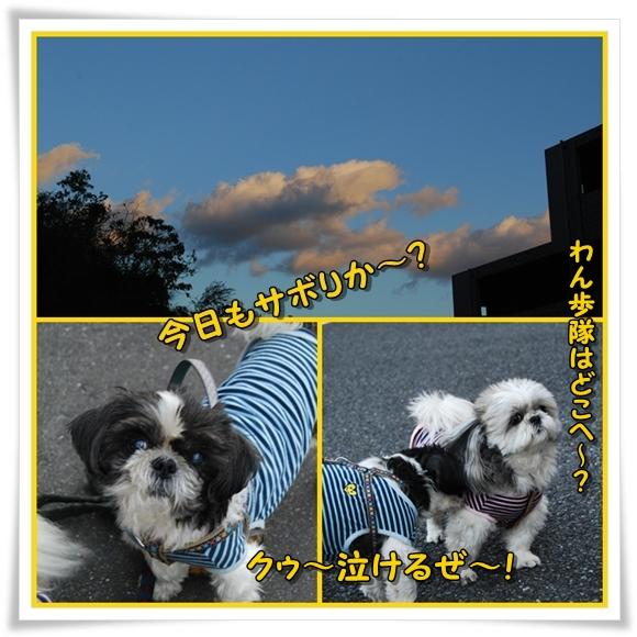kinjyo2009-11-20-11.jpg