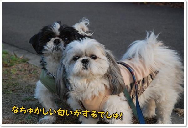 kokusaimura2008-12-04-1DSC_0052_20081210224450.jpg