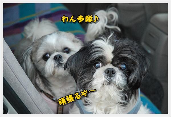 koyasu0111-16DSC_0129.jpg