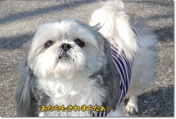 koyasu0317-12DSC_0056.jpg