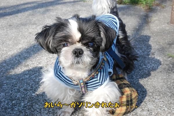 koyasu0317-12DSC_0062.jpg