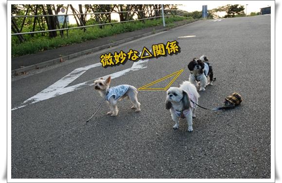 koyasubkf1DSC_0045.jpg