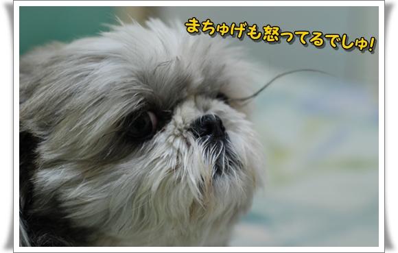 kuramatuge2008-11-20-1DSC_0511.jpg