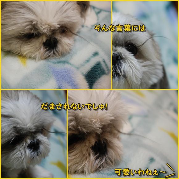 kuramatuge2008-11-20-2.jpg