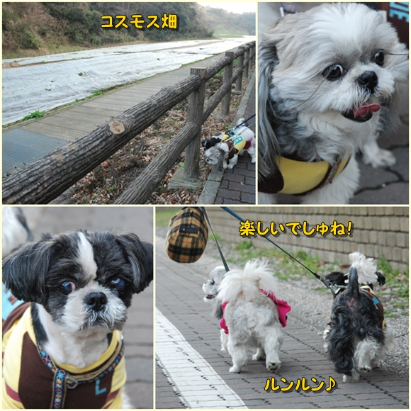 kurihama0214-6.jpg
