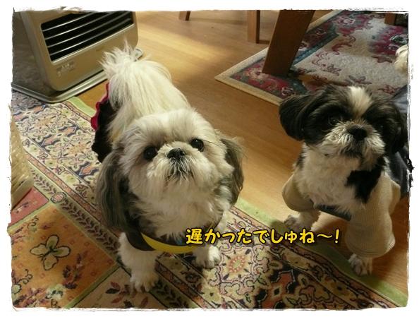 machikutabire1P1020142.jpg