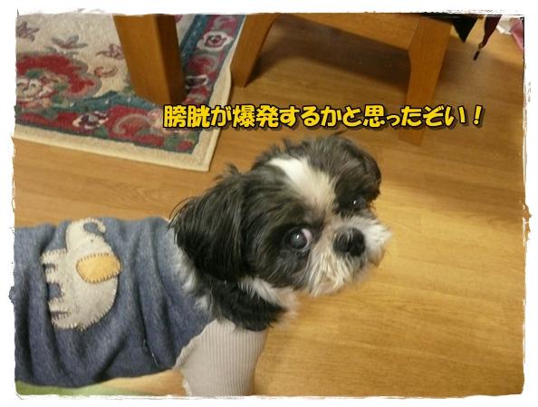 machikutabire2P1020146.jpg