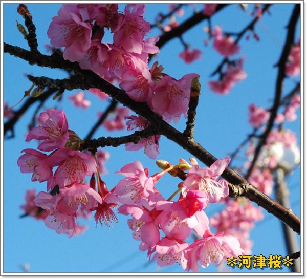 miura0125-7DSC_0158.jpg
