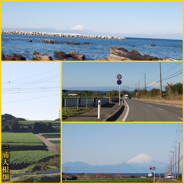 miurafuji4.jpg