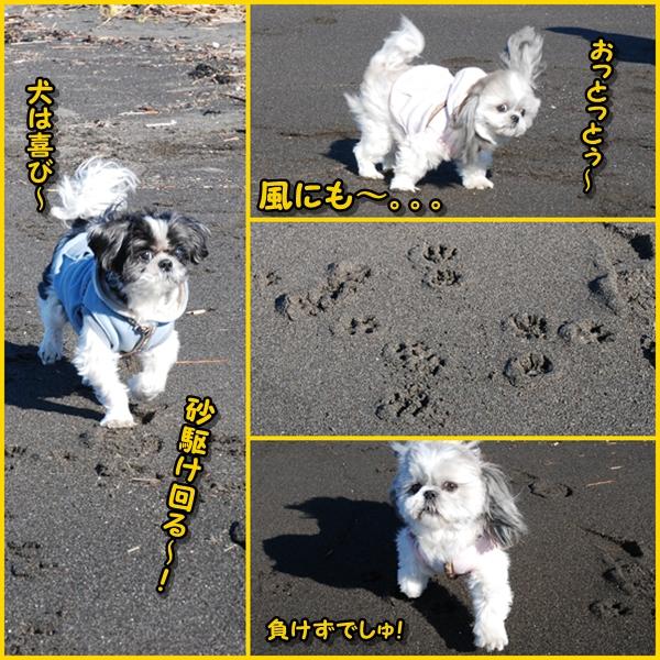 miurafuji8.jpg