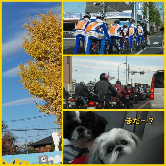 okutama2008-11-23-4.jpg