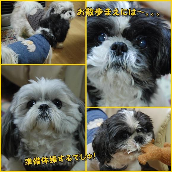 sanpo2008-12-09-1.jpg