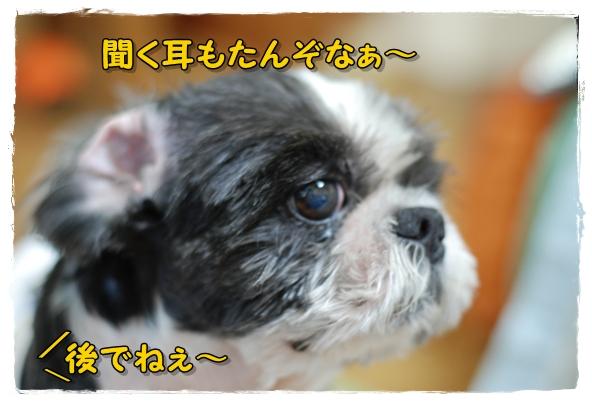 sanpo2DSC_0419.jpg