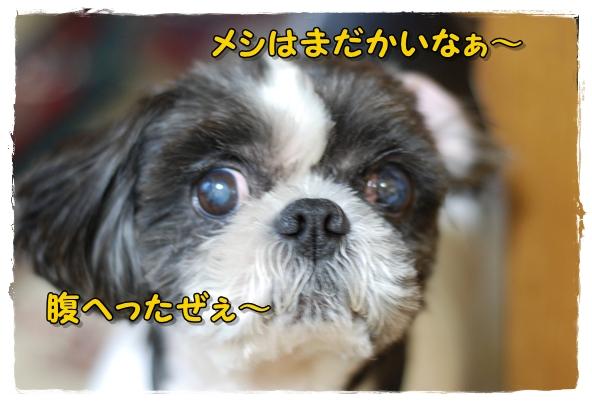 sanpo4DSC_0404.jpg