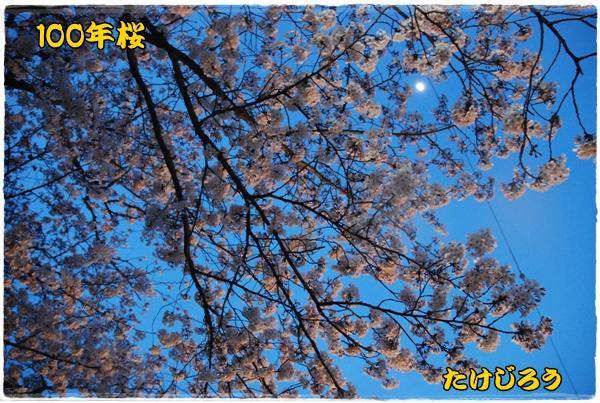 tougei0403-5DSC_0032.jpg