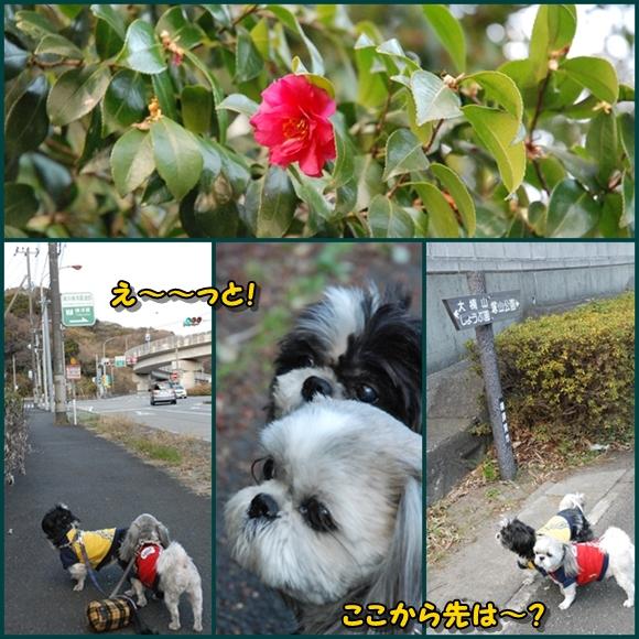 tukayama0106-3.jpg