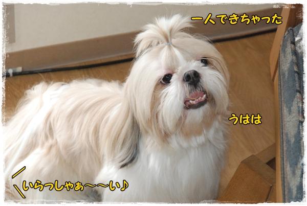 tukayama0404-13DSC_0068.jpg