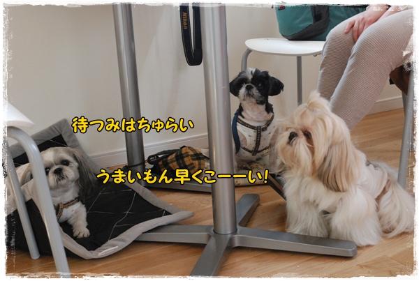 tukayama0404-14DSC_0087.jpg