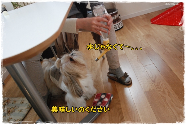 tukayama0404-19DSC_0085.jpg