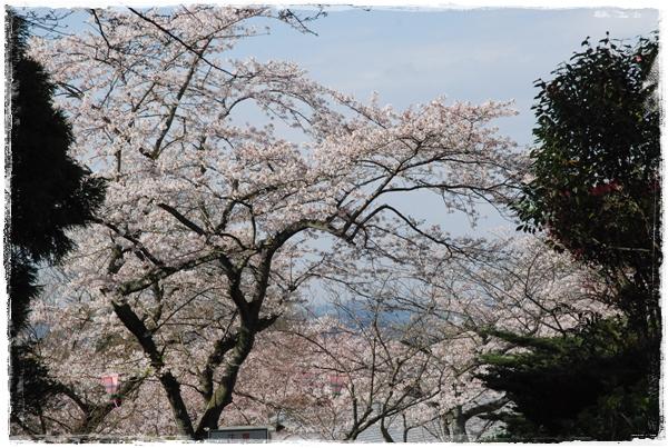 tukayama0404-23DSC_0140.jpg
