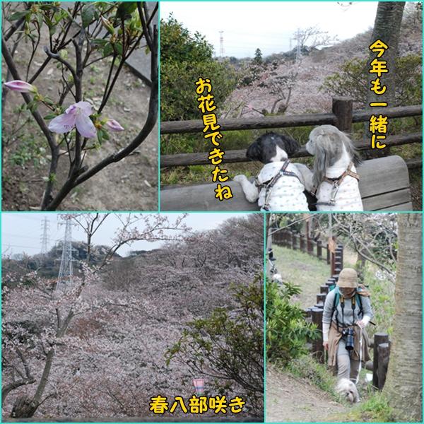 tukayama0404-31.jpg