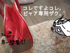 17-2_20090505234853.jpg